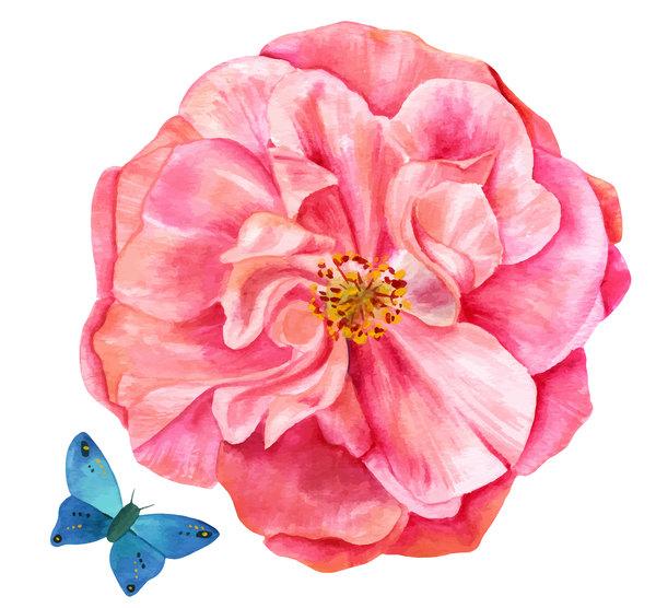watercolor rose pink