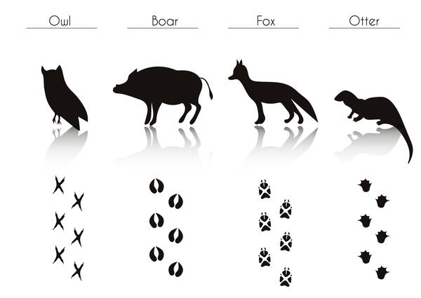 silhouette empreinte animaux