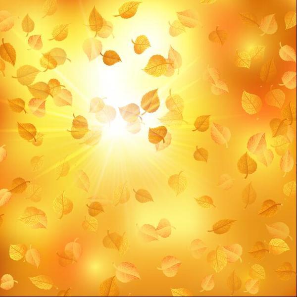 les rayons du soleil les feuilles l'automne