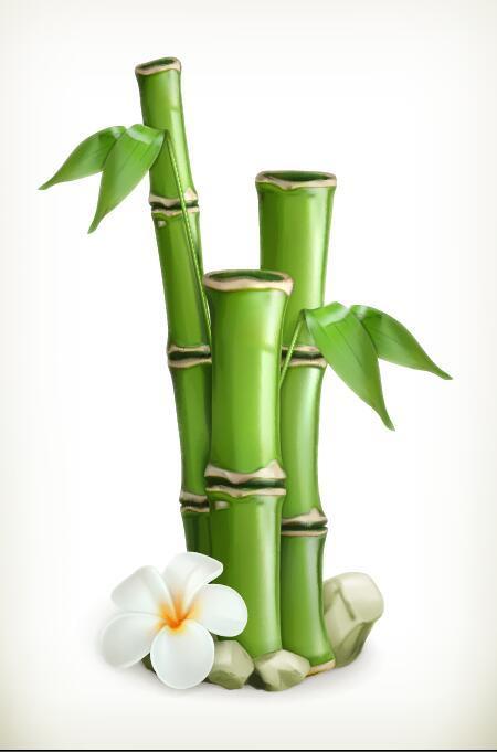 vit Blomma bambù