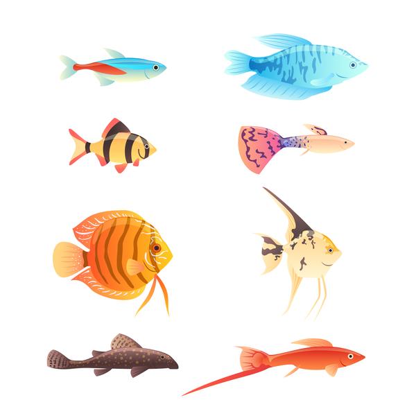 、美しい、魚、熱帯