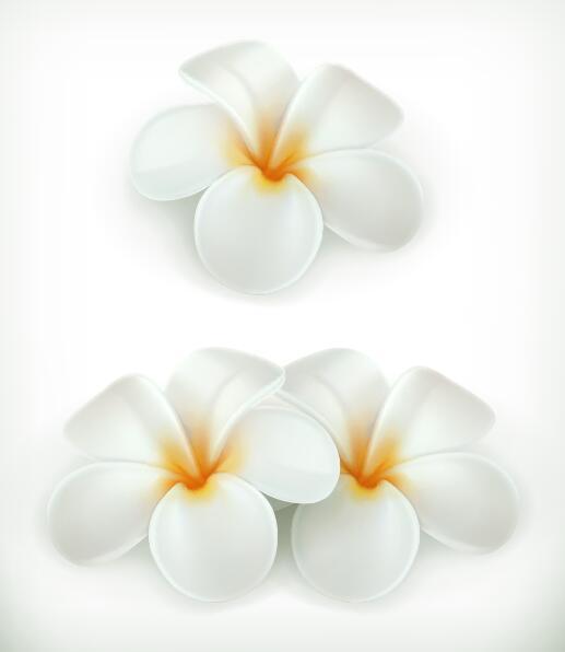、美しい、花