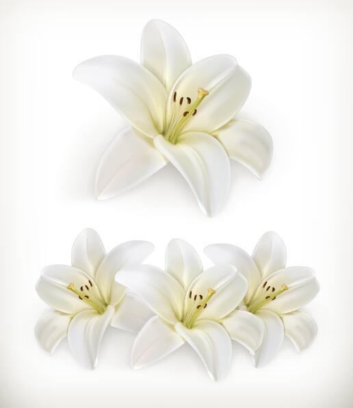 vit Underbart Blomma