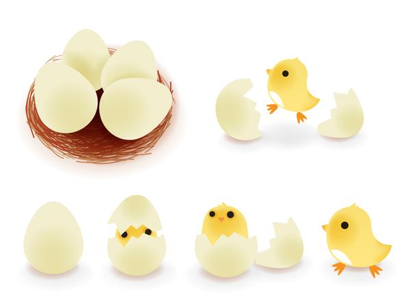 eggs chickens cartoon broken