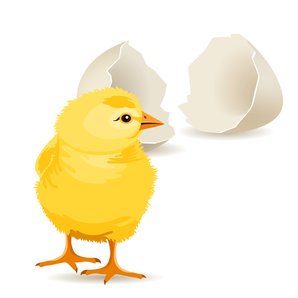 eggs chickens cartoon broken