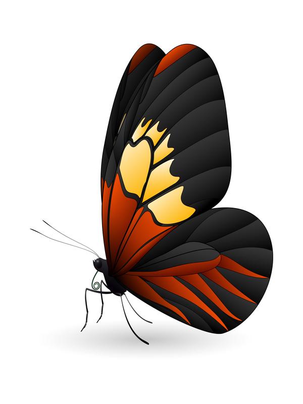 、美しい蝶