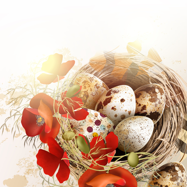 nest feathers eggs easter bird