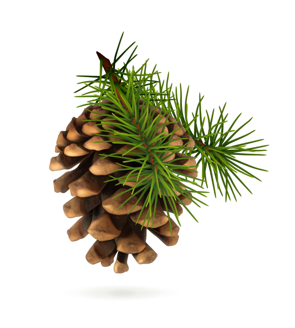 kon jul Gren fir-tree