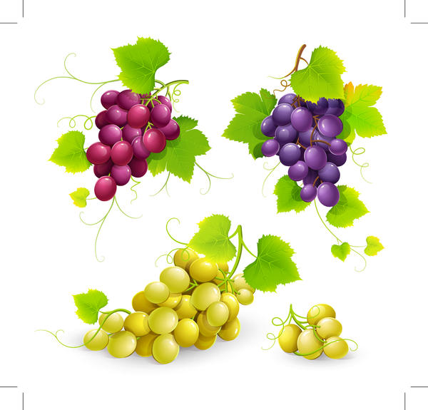 grapes fresh