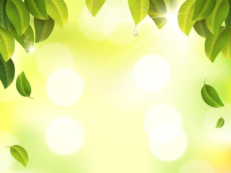 verwischt Sonnenlicht grün Blätter