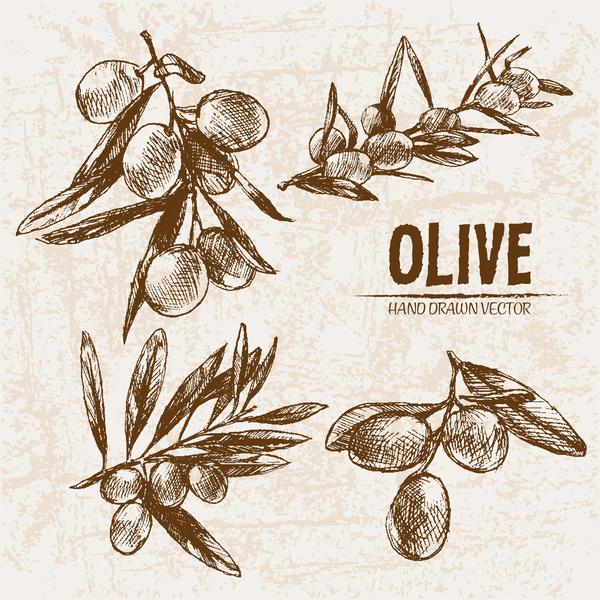 olive mano disegnato