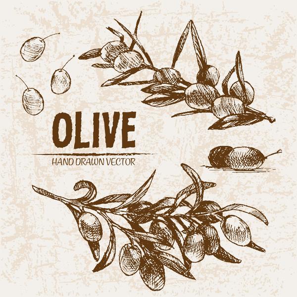 olive main dessiné