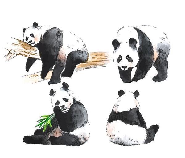 、パンダ、水彩
