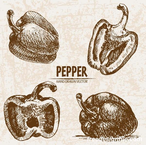 retor pepper hand drawing