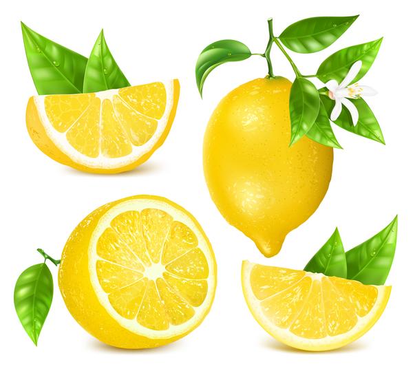 Zitrone Realistische