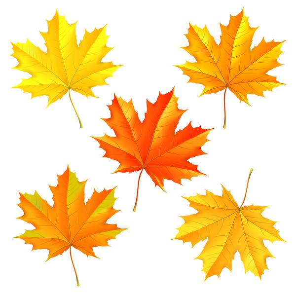l'automne feuilles érable