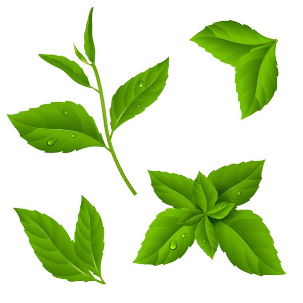 grön blad ange