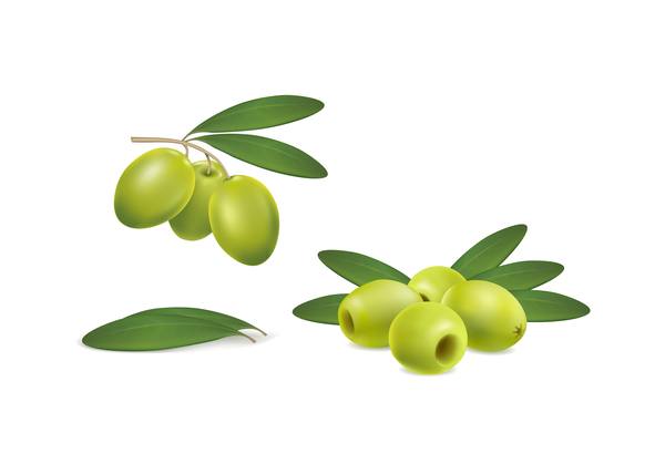、緑、オリーブ
