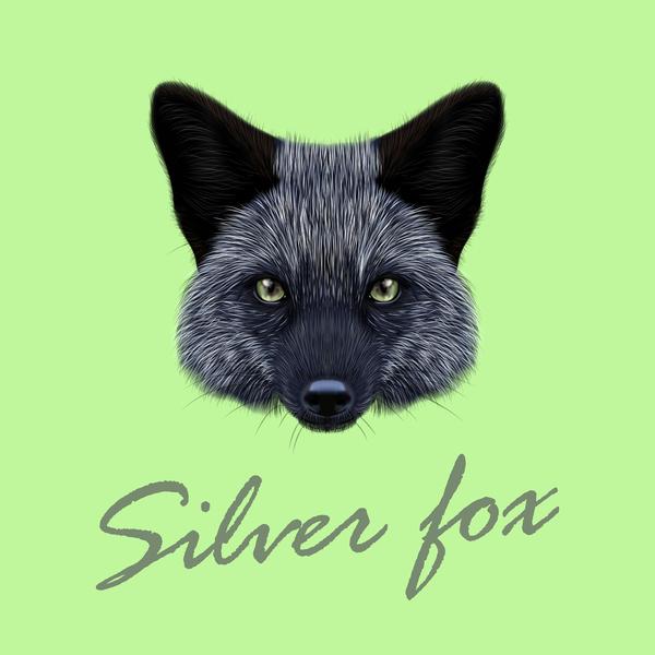 tête fox argent