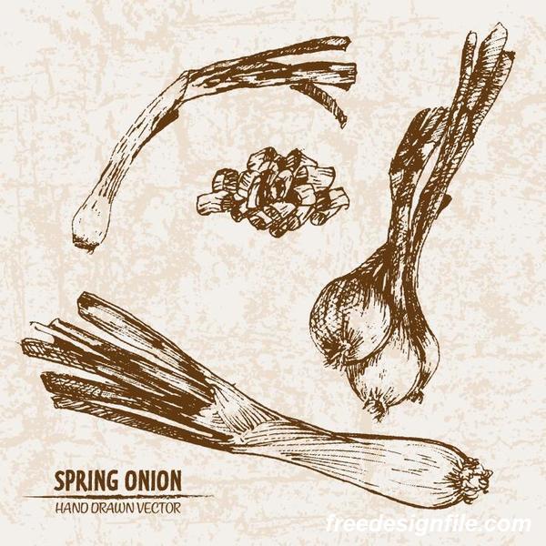 Zwiebel Zeichnung Retorte hand Frühling
