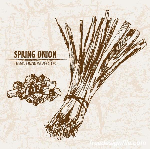 retor printemps oignon main Dessin