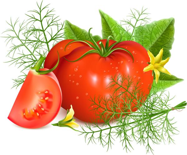 tomat gul Blomma