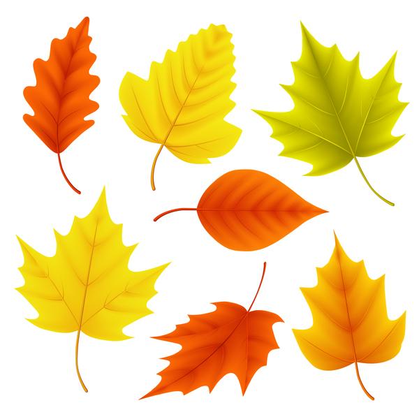 、秋、葉、さまざまな