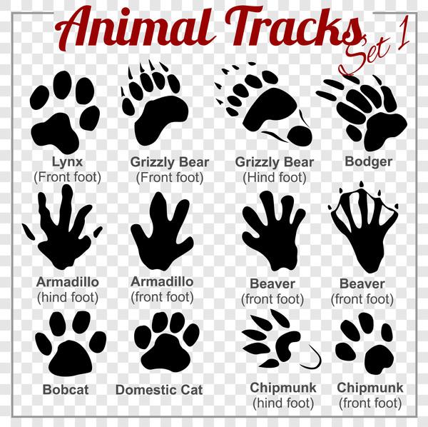tracks animals