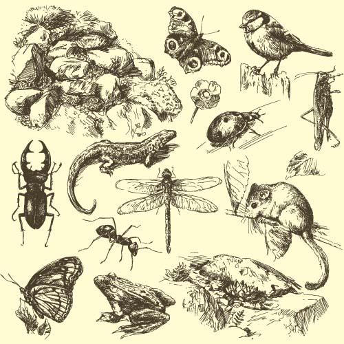 små insekt hand djur