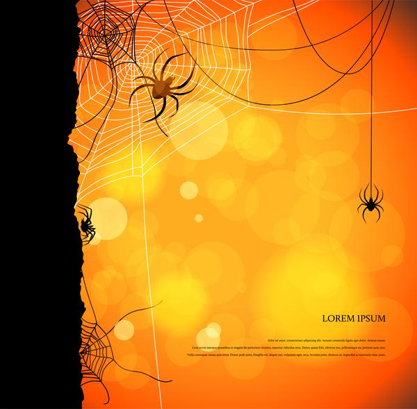 、夜、クモ